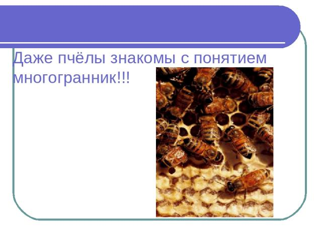 Даже пчёлы знакомы с понятием многогранник!!!