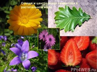 Осевая и центральная симметрия в растительном мире