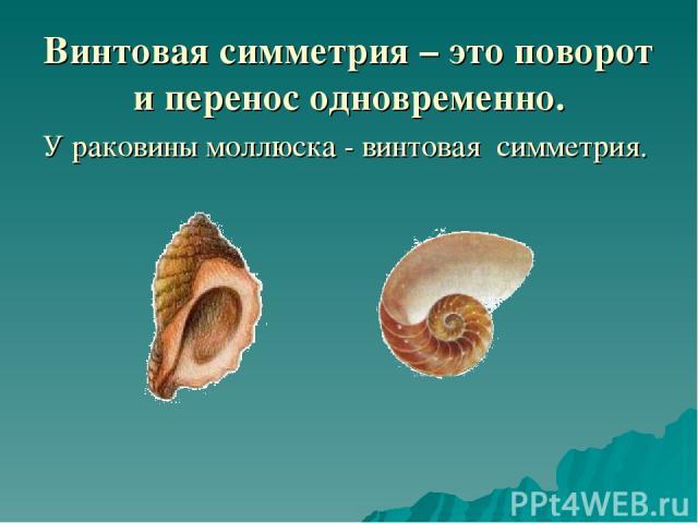 Винтовая симметрия – это поворот и перенос одновременно. У раковины моллюска - винтовая симметрия.