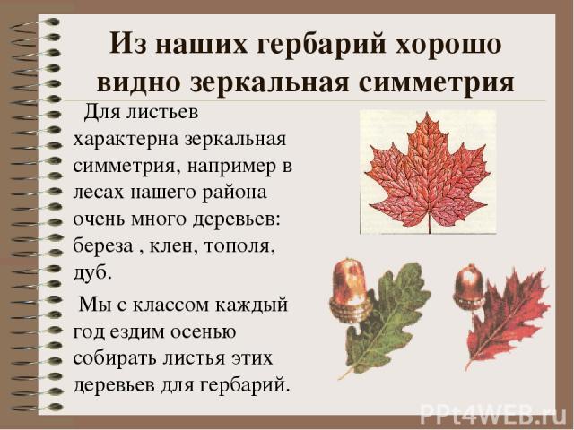 Из наших гербарий хорошо видно зеркальная симметрия Для листьев характерна зеркальная симметрия, например в лесах нашего района очень много деревьев: береза , клен, тополя, дуб. Мы с классом каждый год ездим осенью собирать листья этих деревьев для …