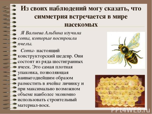 Из своих наблюдений могу сказать, что симметрия встречается в мире насекомых Я Валиева Альбина изучила соты, которые построили пчелы. Соты- настоящий конструкторский шедевр. Они состоят из ряда шестигранных ячеек. Это самая плотная упаковка, позволя…