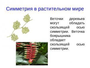 Симметрия в растительном мире Веточки деревьев могут обладать скользящей осью си