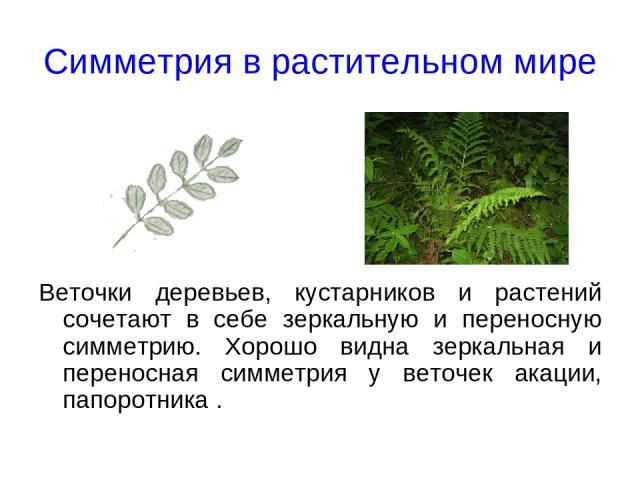 Симметрия в растительном мире Веточки деревьев, кустарников и растений сочетают в себе зеркальную и переносную симметрию. Хорошо видна зеркальная и переносная симметрия у веточек акации, папоротника .