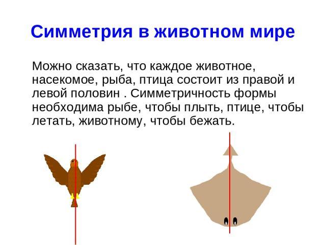 Симметрия в животном мире Можно сказать, что каждое животное, насекомое, рыба, птица состоит из правой и левой половин . Симметричность формы необходима рыбе, чтобы плыть, птице, чтобы летать, животному, чтобы бежать...