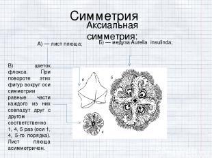 Симметрия Аксиальная симметрия:  А) — лист плюща; Б) — медуза Aurelia insulinda