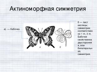 б — лист кислицы; симметрии соответственно 1․m, 3․m. Бабочке свойственна двустор