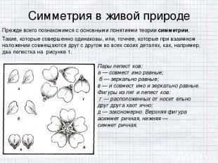 Симметрия в живой природе Прежде всего познакомимся с основными понятиями теории