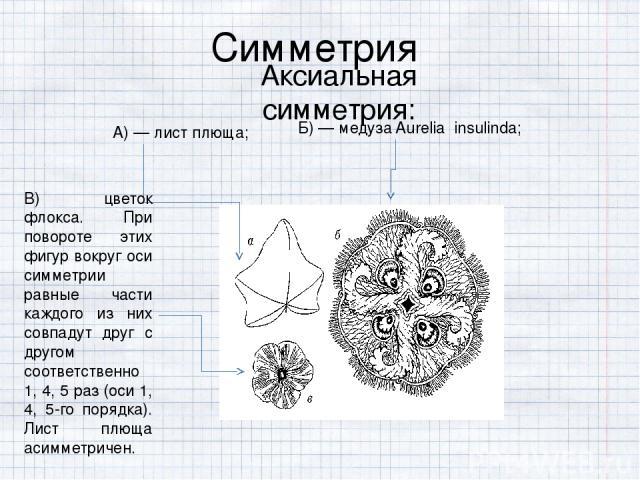 Симметрия Аксиальная симметрия:  А) — лист плюща; Б) — медуза Aurelia insulinda; В) цветок флокса. При повороте этих фигур вокруг оси симметрии равные части каждого из них совпадут друг с другом соответственно 1, 4, 5 раз (оси 1, 4, 5-го порядка). …