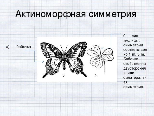 б — лист кислицы; симметрии соответственно 1․m, 3․m. Бабочке свойственна двусторонняя, или билатеральная, симметрия. Актиноморфная симметрия а) — бабочка