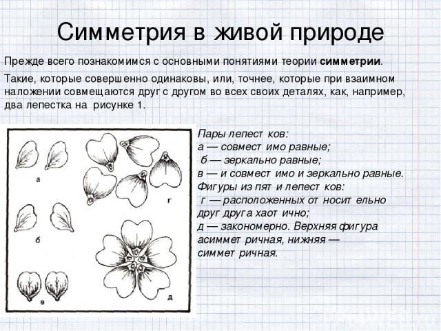 Симметрия в живой природе Прежде всего познакомимся с основными понятиями теориисимметрии. Такие, которые совершенно одинаковы, или, точнее, которые при взаимном наложении совмещаются друг с другом во всех своих деталях, как, например, два лепестка…