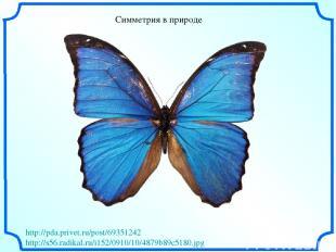 Симметрия в природе http://pda.privet.ru/post/69351242 http://s56.radikal.ru/i15