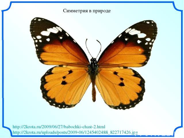 Симметрия в природе http://2krota.ru/2009/06/27/babochki-chast-2.html http://2krota.ru/uploads/posts/2009-06/1245402488_822717426.jpg