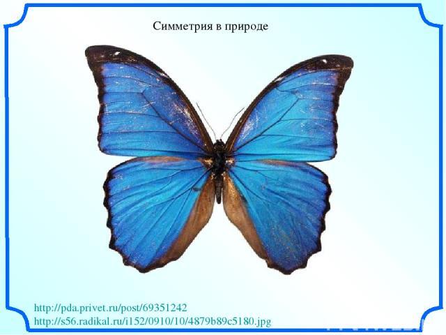 Симметрия в природе http://pda.privet.ru/post/69351242 http://s56.radikal.ru/i152/0910/10/4879b89c5180.jpg