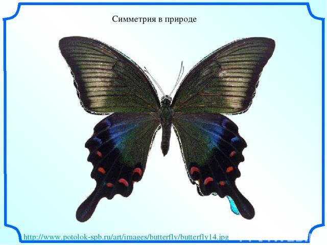Симметрия в природе http://www.potolok-spb.ru/art/images/butterfly/butterfly14.jpg
