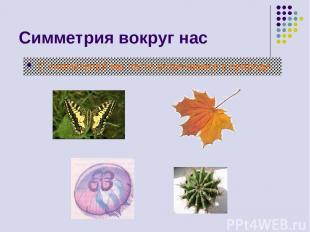 Симметрия вокруг нас С симметрией мы часто встречаемся в природе