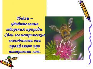 Пчёлы – удивительные творения природы. Свои геометрические способности они прояв