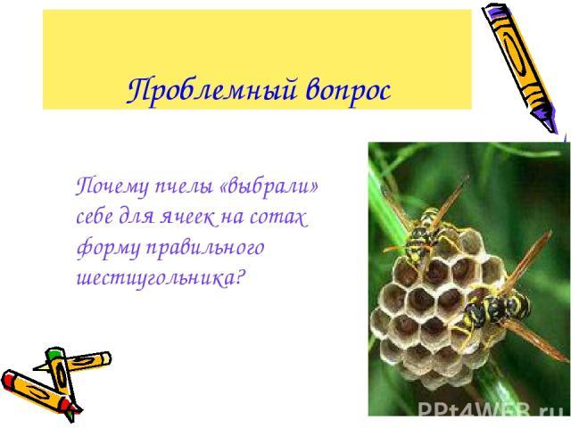 Проблемный вопрос Почему пчелы «выбрали» себе для ячеек на сотах форму правильного шестиугольника?
