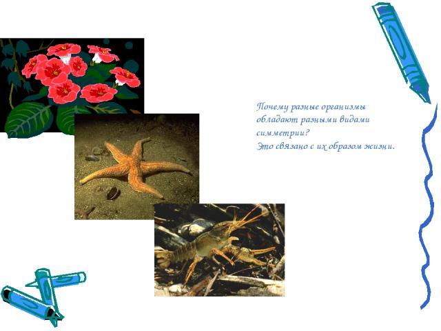 Почему разные организмы обладают разными видами симметрии? Это связано с их образом жизни.