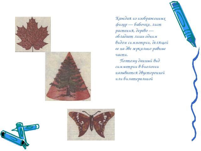 Каждая из изображенных фигур — бабочка, лист растения, дерево — обладает лишь одним видом симметрии, делящей ее на две зеркально равные части. Поэтому данный вид симметрии в биологии называется двусторонней или билатеральной