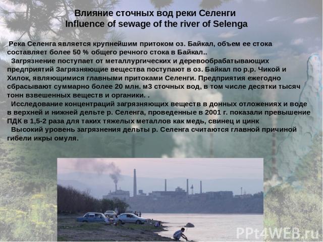 Влияние сточных вод реки Селенги Influence of sewage of the river of Selenga Река Селенга является крупнейшим притоком оз. Байкал, объем ее стока составляет более 50 % общего речного стока в Байкал.. Загрязнение поступает от металлургических и дерев…