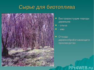 Сырье для биотоплива Быстрорастущие породы деревьев: - ольха - ива Отходы дерево