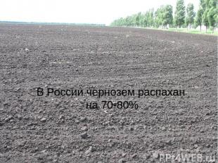 В России чернозем распахан на 70-80%