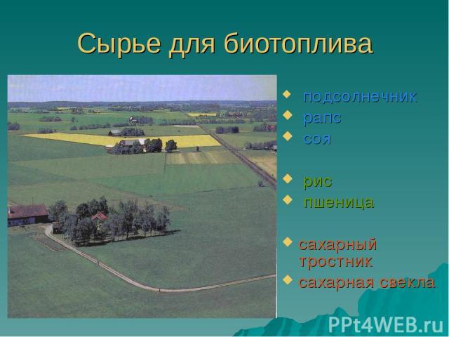 Сырье для биотоплива подсолнечник рапс соя рис пшеница сахарный тростник сахарная свекла