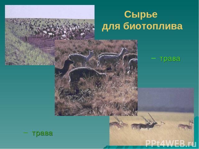 трава Сырье для биотоплива трава