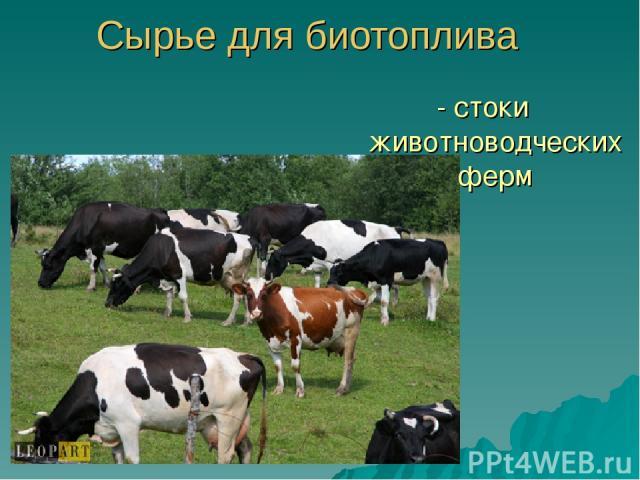Сырье для биотоплива - стоки животноводческих ферм