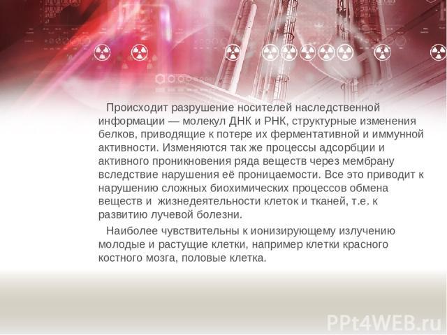 Происходит разрушение носителей наследственной информации — молекул ДНК и РНК, структурные изменения белков, приводящие к потере их ферментативной и иммунной активности. Изменяются так же процессы адсорбции и активного проникновения ряда веществ чер…