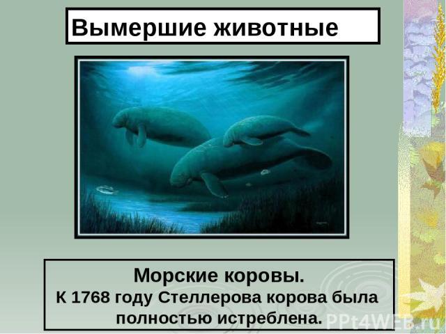 Морские коровы. К 1768 году Стеллерова корова была полностью истреблена. Вымершие животные