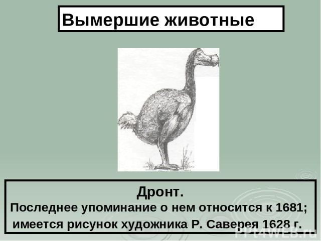 Дронт. Последнее упоминание о нем относится к 1681; имеется рисунок художника Р. Саверея 1628 г. Вымершие животные