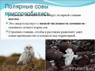Полярные совы приспособились Тенденции : Плотность сов вокруг полярной станции в
