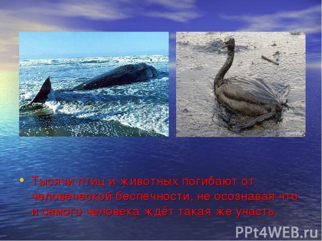 Тысячи птиц и животных погибают от человеческой беспечности, не осознавая что и самого человека ждёт такая же участь.