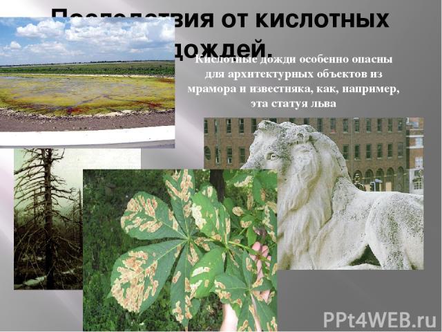 Последствия от кислотных дождей. Кислотные дожди особенно опасны для архитектурных объектов из мрамора и известняка, как, например, эта статуя льва