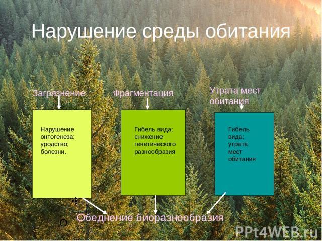 Нарушение среды обитания О