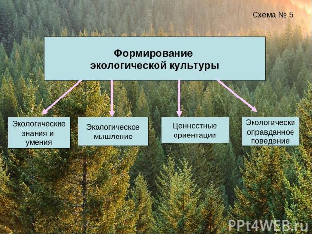 Формирование экологической культуры Схема № 5 Экологические знания и умения Экологическое мышление Экологически оправданное поведение Ценностные ориентации