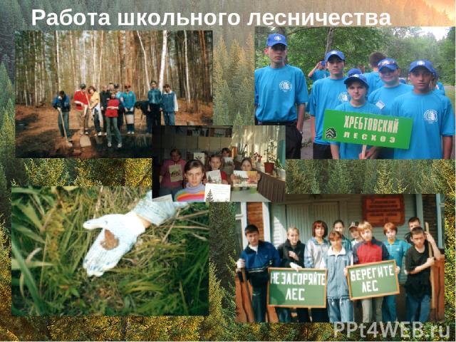 Работа школьного лесничества