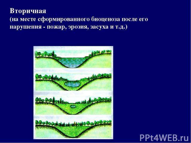 Вторичная (на месте сформированного биоценоза после его нарушения - пожар, эрозия, засуха и т.д.)