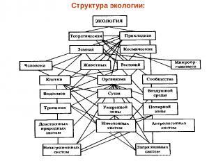 Структура экологии: