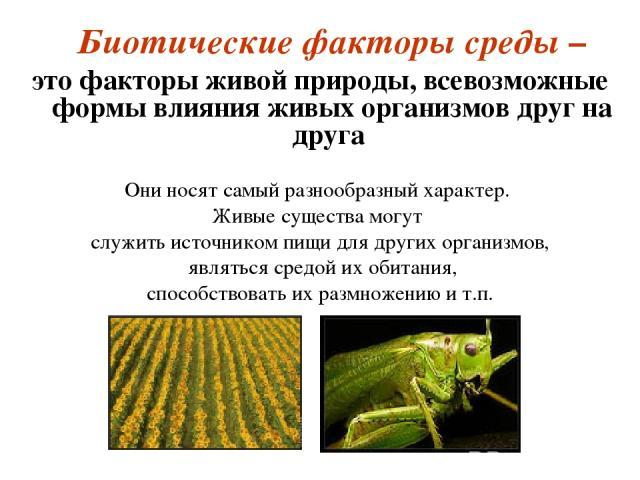 Биотические факторы среды – это факторы живой природы, всевозможные формы влияния живых организмов друг на друга Они носят самый разнообразный характер. Живые существа могут служить источником пищи для других организмов, являться средой их обитания,…