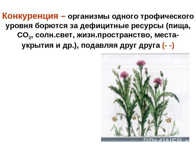 Конкуренция – организмы одного трофического уровня борются за дефицитные ресурсы (пища, СО2, солн.свет, жизн.пространство, места-укрытия и др.), подавляя друг друга (- -)