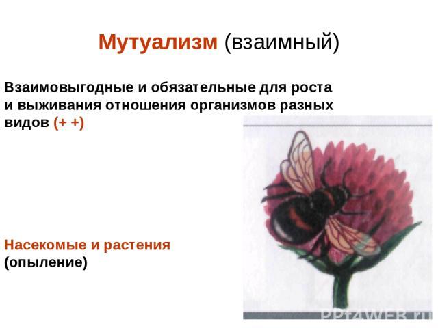 Мутуализм (взаимный) Взаимовыгодные и обязательные для роста и выживания отношения организмов разных видов (+ +) Насекомые и растения (опыление)
