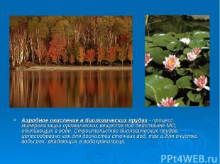 Аэробное окисление в биологических прудах - процесс минерализации органических в