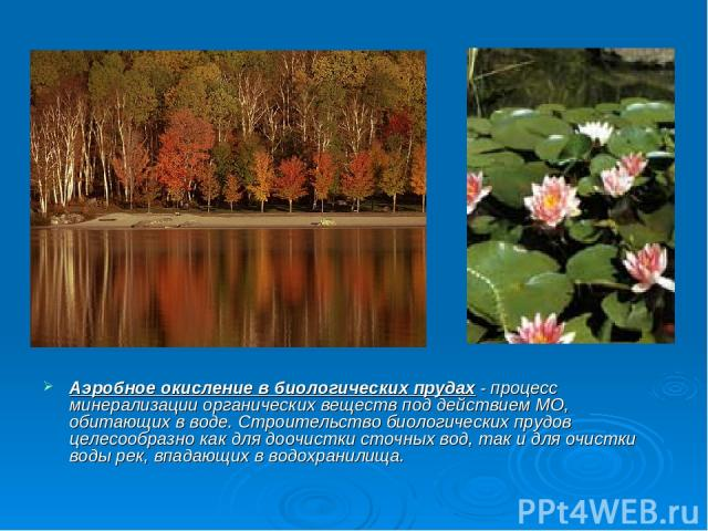 Аэробное окисление в биологических прудах - процесс минерализации органических веществ под действием МО, обитающих в воде. Строительство биологических прудов целесообразно как для доочистки сточных вод, так и для очистки воды рек, впадающих в водохр…