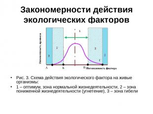 Закономерности действия экологических факторов Рис. 3. Схема действия экологичес