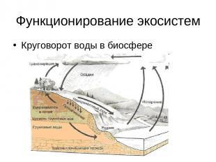 Функционирование экосистем Круговорот воды в биосфере