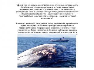 """""""Дело в том, что киты не имеют волос, меха или перьев, которые могли бы обеспечи"""