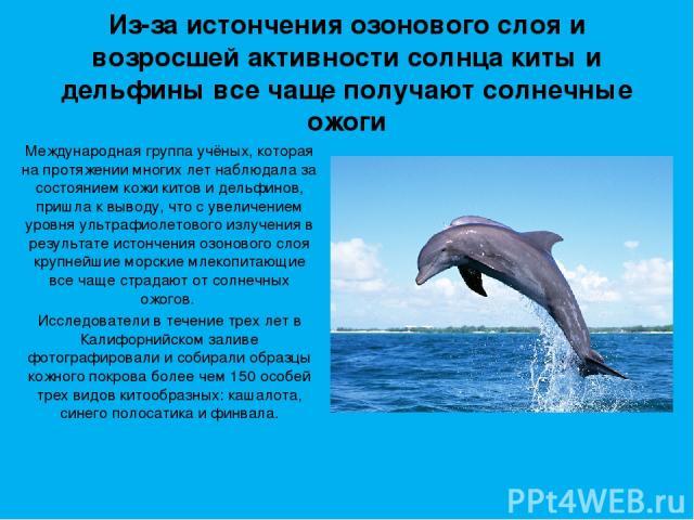 Из-за истончения озонового слоя и возросшей активности солнца киты и дельфины все чаще получают солнечные ожоги Международная группа учёных, которая на протяжении многих лет наблюдала за состоянием кожи китов и дельфинов, пришла к выводу, что с увел…
