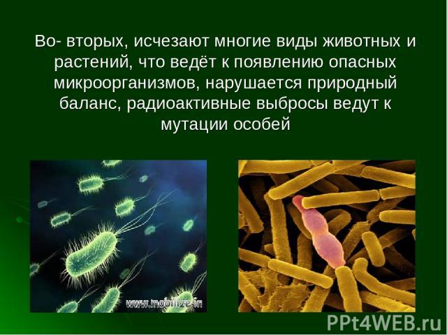 Во- вторых, исчезают многие виды животных и растений, что ведёт к появлению опасных микроорганизмов, нарушается природный баланс, радиоактивные выбросы ведут к мутации особей